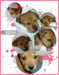 Roxy by blushing