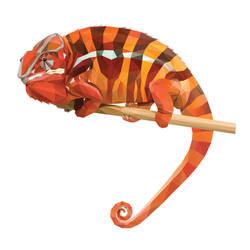 Chameleon - GEO