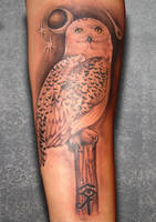 Snowy Owl by asussman