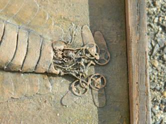 Opabinia regalis fossil detail by HerbertW