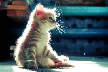 Cute Kitten 03 by gamebalance