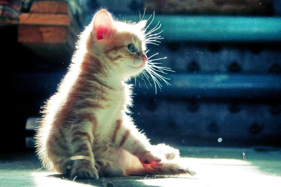 котики маленькие фото