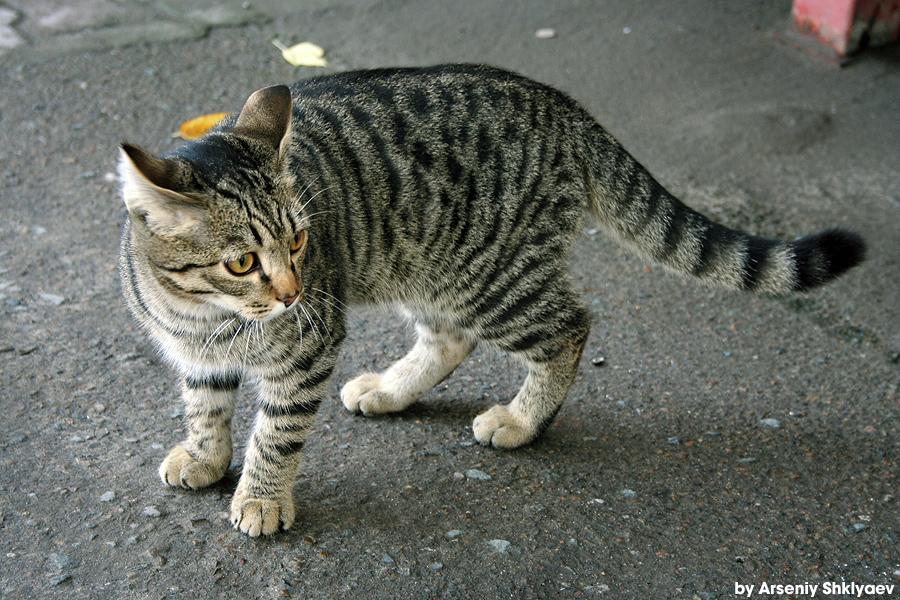 Street Cat in Autumn by gamebalance