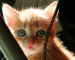 Cute Kitten 05