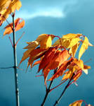 Autumn colors 01 by gamebalance