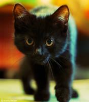 Morning kitten by gamebalance