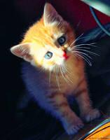 Cute Kitten 06 by gamebalance