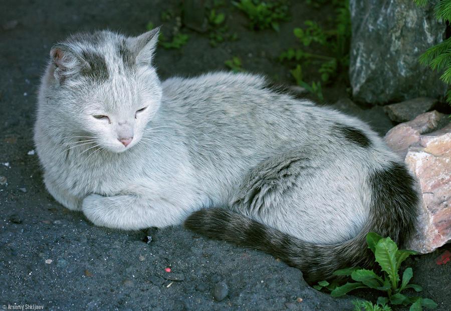 Dirty Street Cat by gamebalance