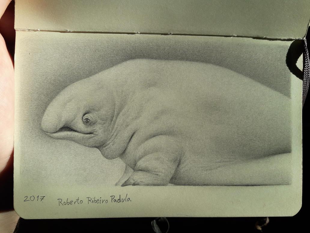 Fatty McFatso by Bonekrishna