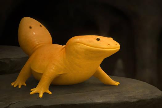 Salamandra Aurea