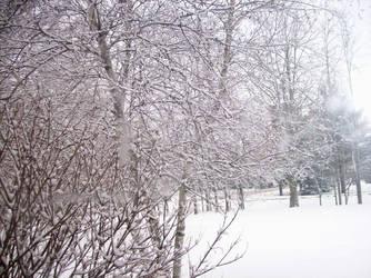 Beloved Winter- Delicate Land