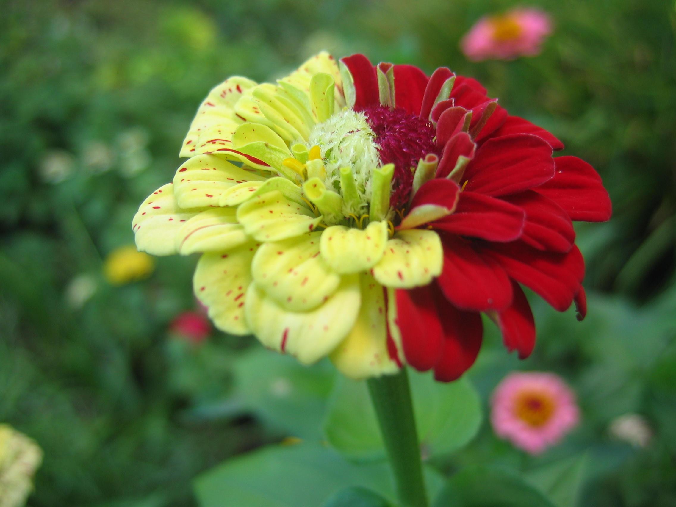 Цветы гибрид а фото