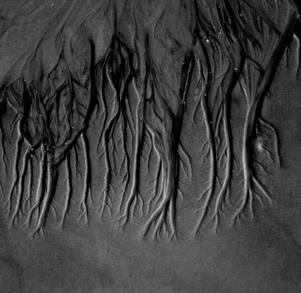 Dendrites by Nahuask