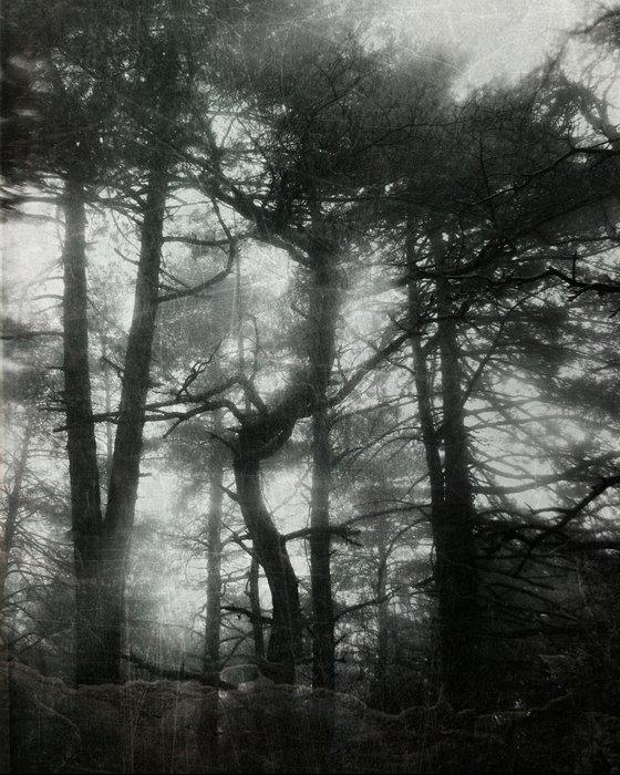 Eala/L'esprit et l'etre by Nahuask
