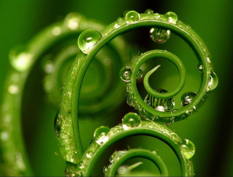 Plant Spiral by tatmeup