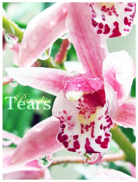 Paradise Tears by ParadiseTears