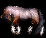 Horse 06