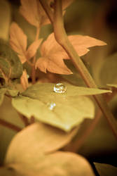 And the drop goes Ping by brokenbokeh