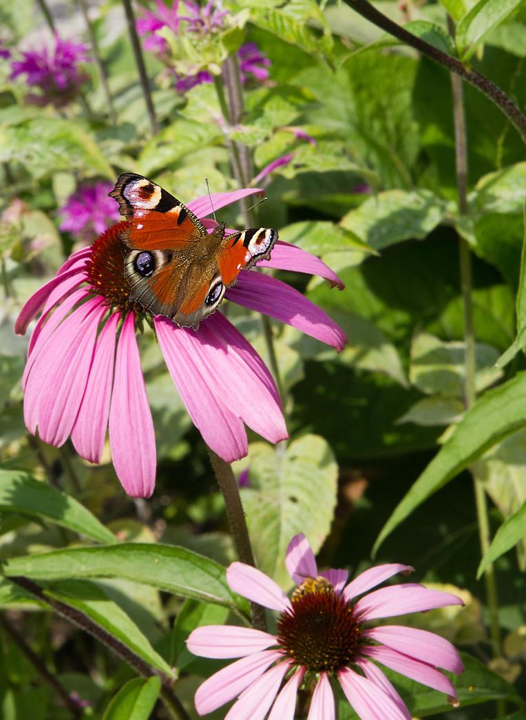 Butterfly resting by brokenbokeh