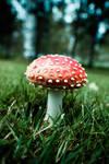 Do not eat mushroom