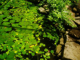 At the zoo:  Lilly Pads