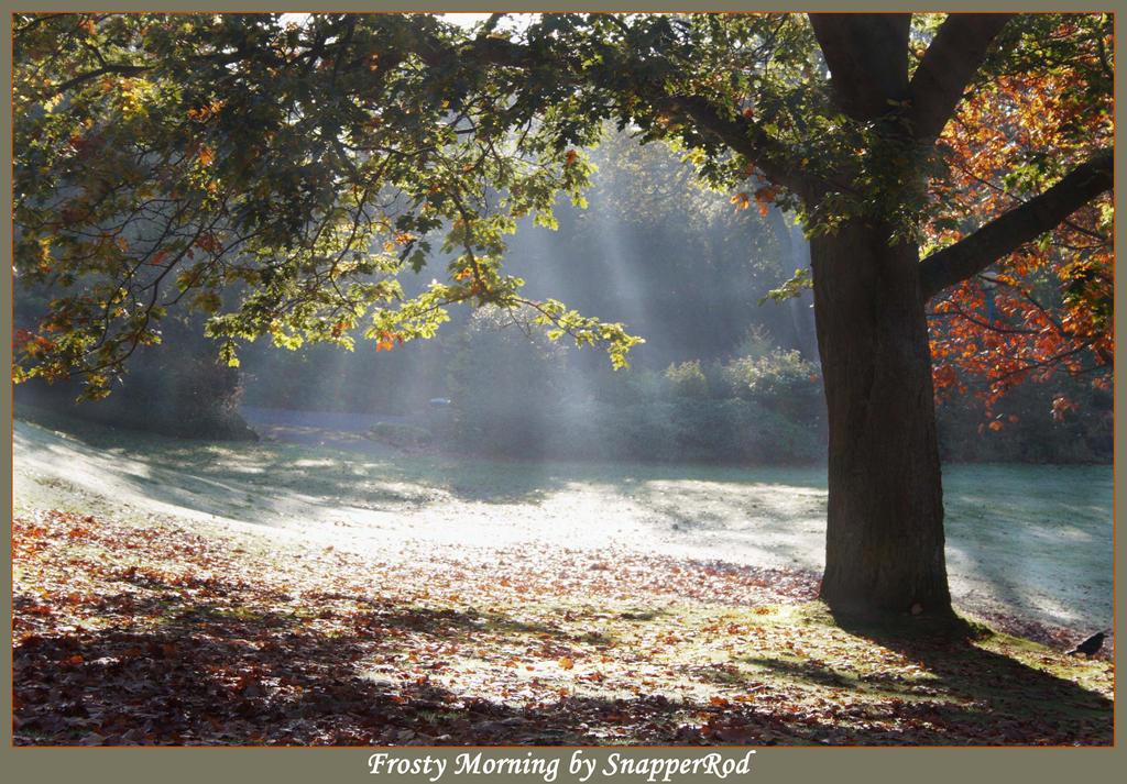 Frosty Morning by SnapperRod