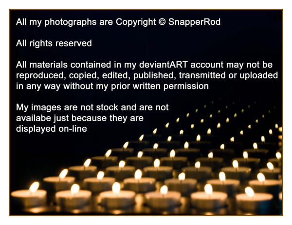 Copyright by SnapperRod