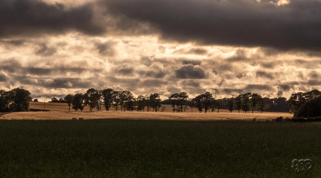 Light up the Landscape by SnapperRod