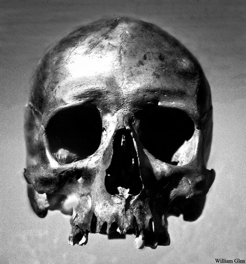 Skull by William-Glen ...