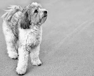 Sid by DogBoy74