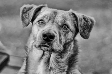 I'm Ready.. by DogBoy74
