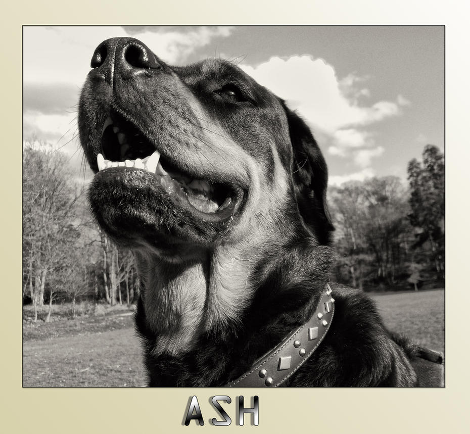 Ash by DogBoy74