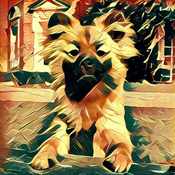 Mylo by DogBoy74