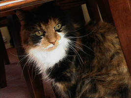 Cleo, my friend, my cat by schwartzschildradius