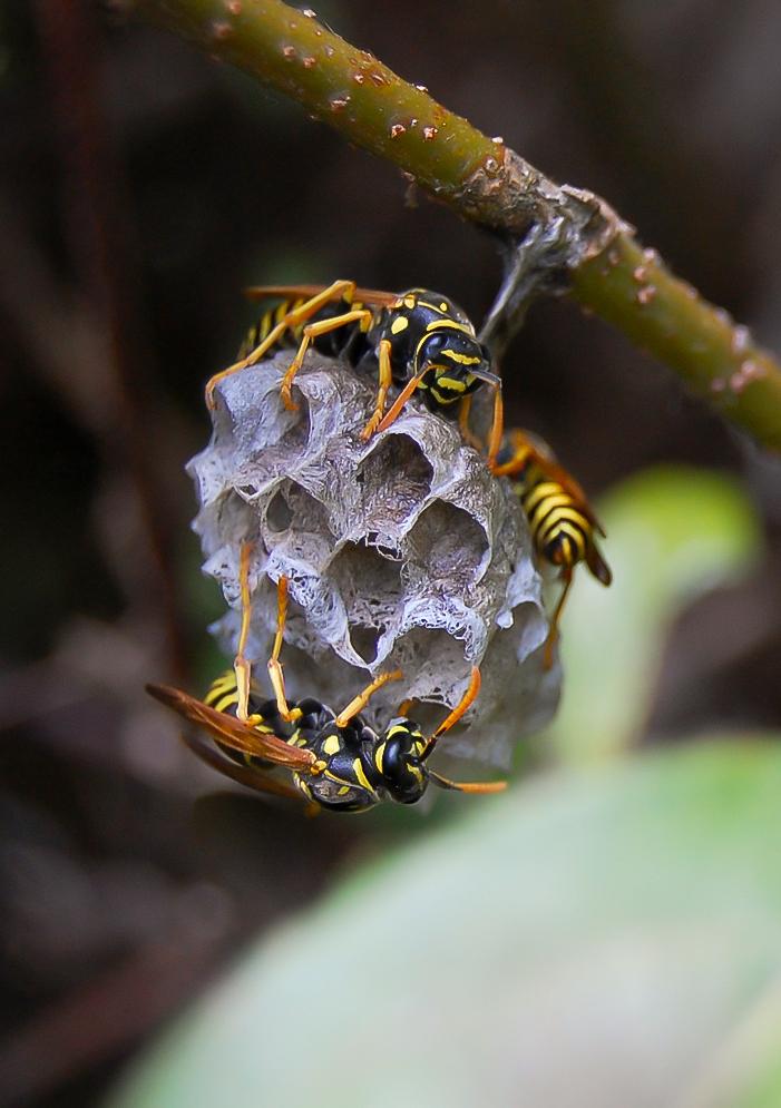 hive by raslar