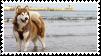 alaskan malamute stamp