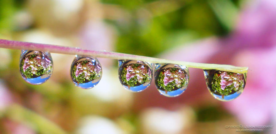 water droplet photography reflected - photo #42