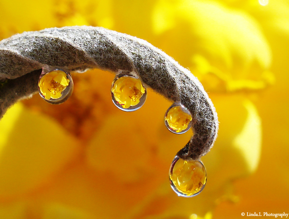 Yellow drops by lindahabiba