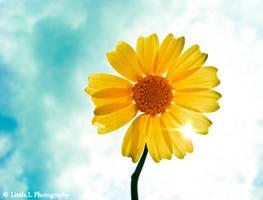 Like the sun by lindahabiba