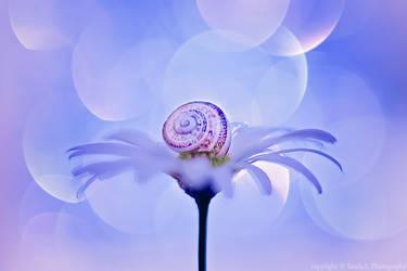 flower and snail by lindahabiba