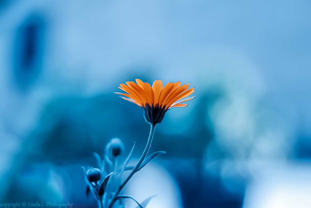 magic bleu by lindahabiba