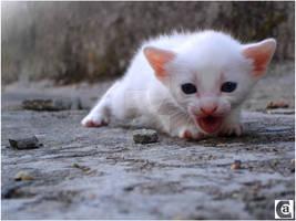 Petit Cat