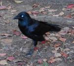 Land Birds - Stock 03.