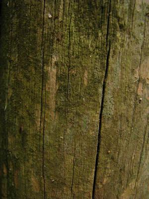 Wood Texture 09.