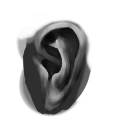 Sketchbruary 03 - Ear Study