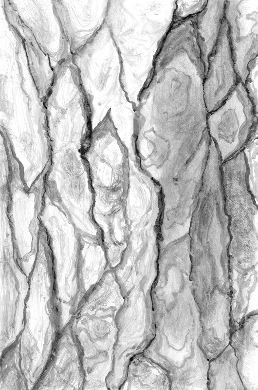 Inktober 09 - Tree bark