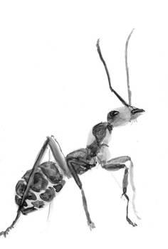 Inktober 11 - Ant