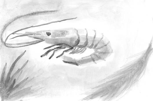 Inktober 12 - Shrimp