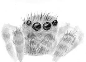 Inktober 13 - Jumping spider