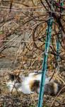Cat Under the Vines